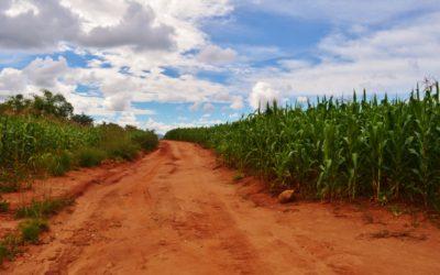 Confusione africana: le prime settimane in Tanzania