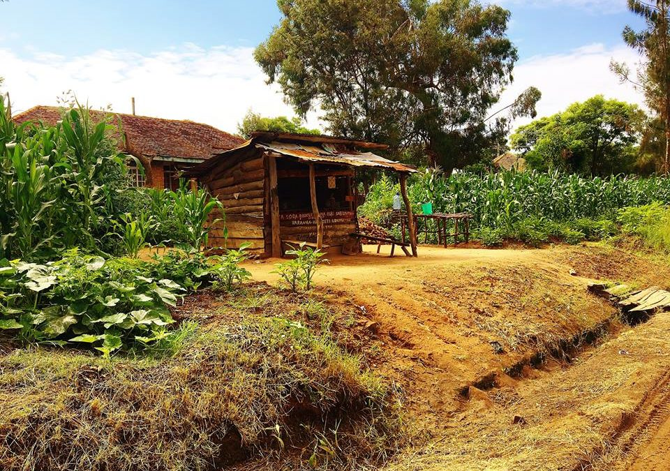«Cerco un po'd'Africa in giardino»: essere cuneesi nel mondo